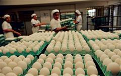 Caixa de ovos extra grandes