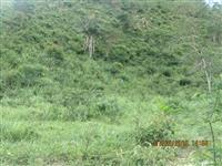 Fazenda em Divisópolis-Mg com 10 Alqueires