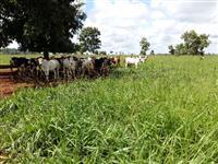 Excelente fazenda no município de Paracatu -MG