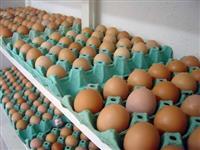 Ovos caipira e ovos brancos