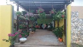 Fornecedores de Flores, Plantas Ornamentais e Frutífera