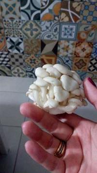 Shimeji branco