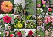 Mudas de plantas nativas, Jardins e pomar