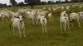 Fazenda 4.300 hectares
