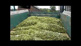 Silagem de Milho Verde