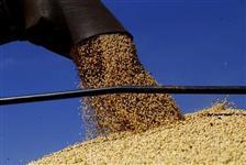 Vendo contrato de divida a receber valor 85.500,00 mil Por 58 Mil R$ troco por, Milho ou soja.