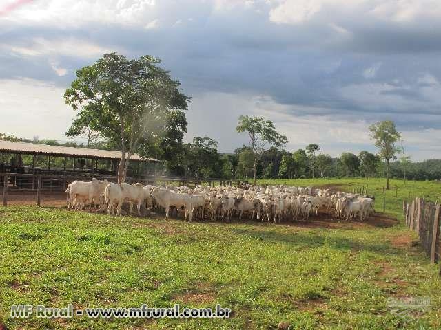 Vendo ecxelente fazenda em Tocantins, á 30 km da divisa da Bahia e à 100 km de Luis Eduardo Magalães