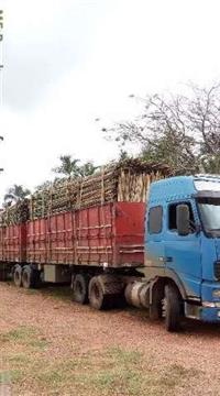 Vende se bambu