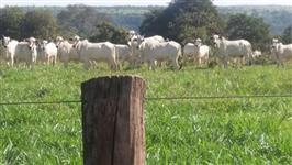 Fazenda de Gado em Cassilândia