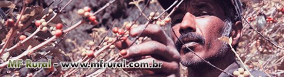 Seguro Agricola
