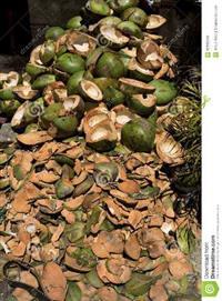 Fibra do coco fornecimento no Rio de Janeiro
