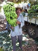Banana&cia