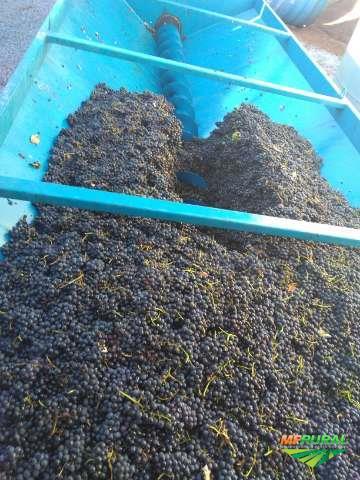 Vinhos a granel (serra gaúcha)