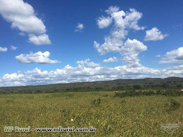 Fazenda de 4.814ha em Canto do Buriti - Piauí