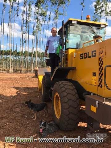 Cavaco de Eucalipto Biomassa em Marilia SP