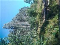 Vendo floresta de 100 há.  Eucalipto dunnii 8,5 anos em bocaiuva do sul na beira do asfalto