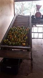 Beneficiamento de Laranja e Limão