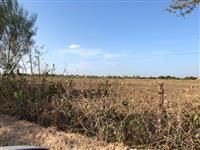 Vendo terreno em Limoeiro do Norte-CE