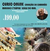 CURSO ONLINE DE CAMARÃO MARINHO É TILÁPIAS
