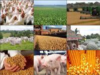 Domínio premium Agroinvestimentos