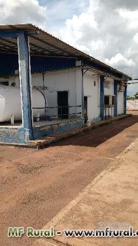 Laticínio no estado do Tocantins