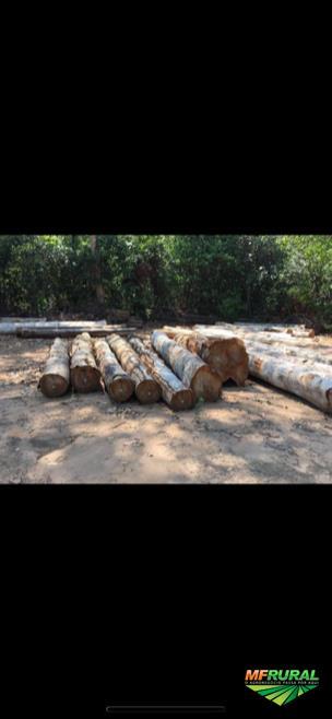 Fazenda de 10.000 Hectares em nova Maringá/MT