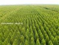 Fazenda para Venda, Ribas do Rio Pardo / MS, bairro Ribas do Rio Pardo - MS, por R$ 1.000.000.000,00