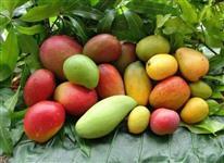 Mudas frutíferas (abacaxisbanana, pitaya, goiaba, manga, uvas) enxertadas produzem em menos de 1 ano