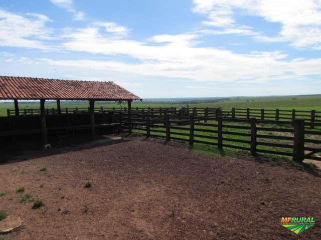 Fazenda TOP  Jaraguari – MS