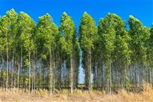 Floresta de Guanandi - Poupança Verde