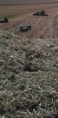Fenos de aveia branca para cascavel e regiao