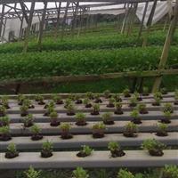 Hortaliças Hidropônicos