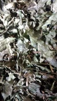 Trabalho com ervas medicinais varias qualidades