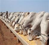 Procuro Subprodutos e Resíduos Industriais para nutrição animal