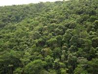 compra e venda mata nativa temos área para compensação ambiental, crédito bancário e carbono em todo