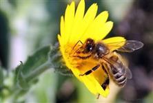 Procuro terra para apicultura