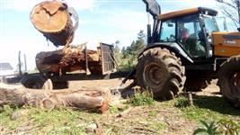 Compro floresta de eucalipto