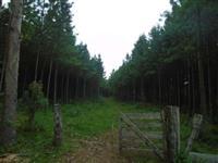 Fazenda Pinheirão