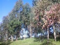 Fazenda Birmania