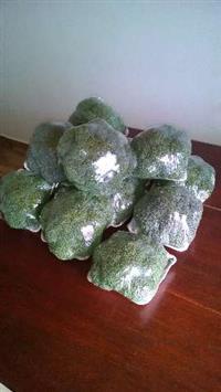 Brócolis Gonçalves