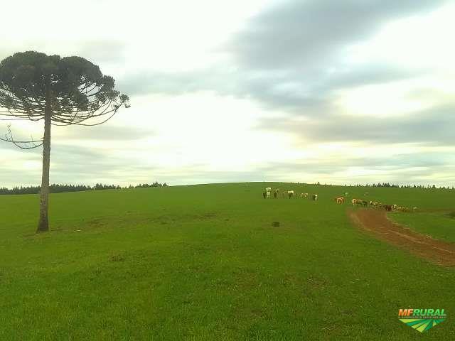 Área agrícola (30 alqueires)