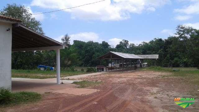 Indústria de polpa de Açai