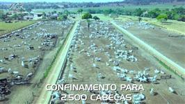 Fazenda com Confinamento