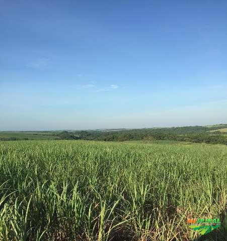 Fazenda em Guararapes-Sp