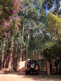 Eucalipto em pé 4 a 8 anos, cerca de 8 hectares.
