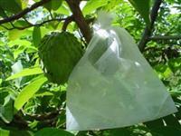 Sacos em T.N.T Para Proteção De Frutas No Pé 10 cm x 15 cm  com 500 unidades