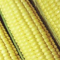 Venda de milho verde