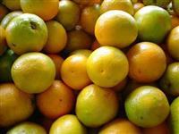 Venda de laranja