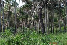 Fazenda 500HA proximo a Porto Murtinho-MS, em Puerto Sastre-PY