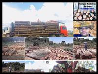 Compra de Florestas Pinos Em Contratos de 12 x 24 x 36 meses.